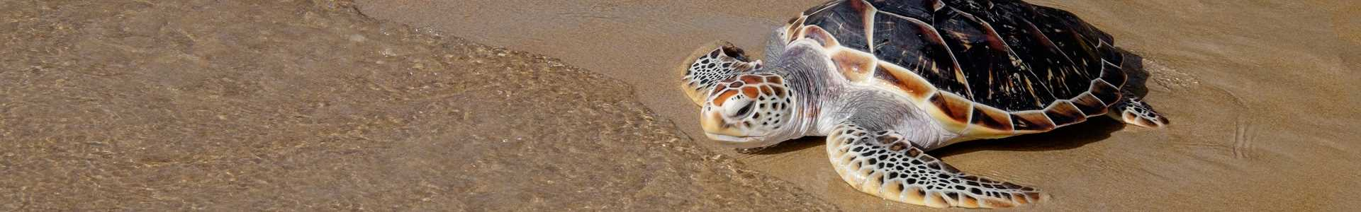 SLP Environmental CSR Thailand Turtle Release Corporate Social Responsiblity Asia-px_Reduced